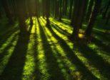 Уничтожение зеленых насаждений в Лахте